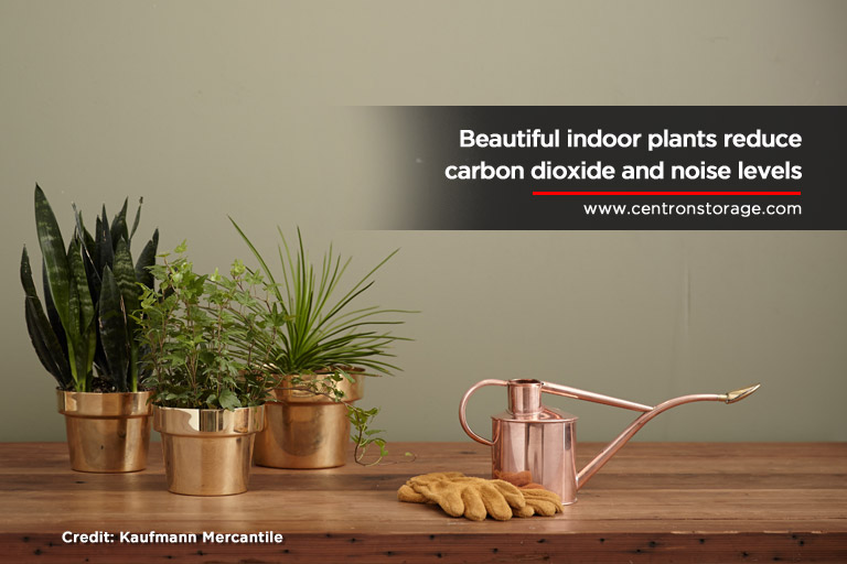 Beautiful-indoor-plants-reduce-carbon-dioxide-and-noise-levels
