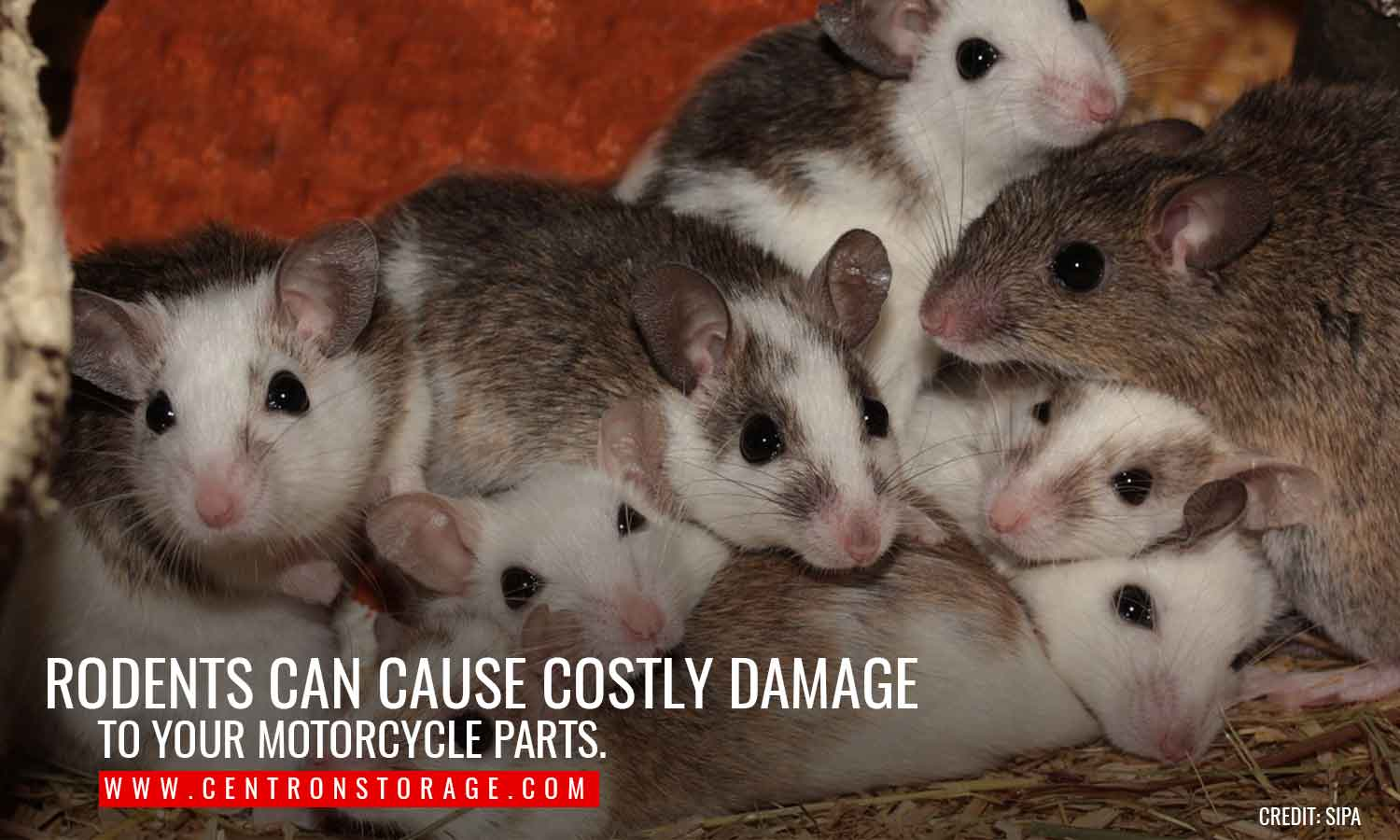 Rodents can cause costly damage to your motorcycle parts.